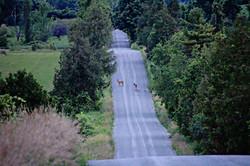 Deer on Island View Rd