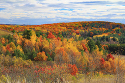 Fall colours in Northumberland