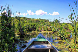 Canoe ride through the marsh
