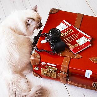 Travel organiation