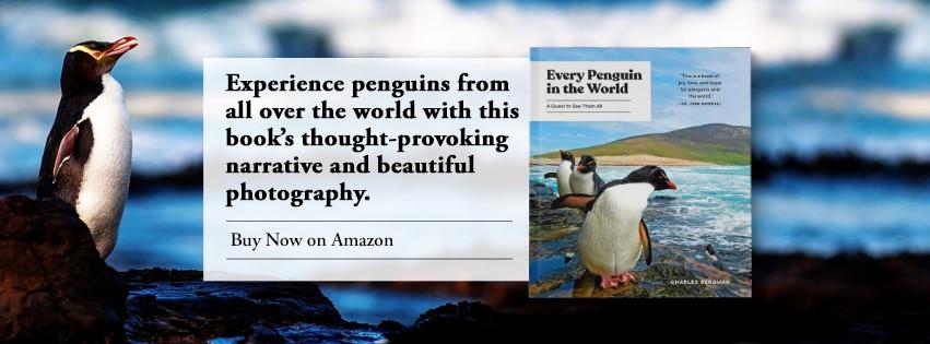 Every Penguin in the World description