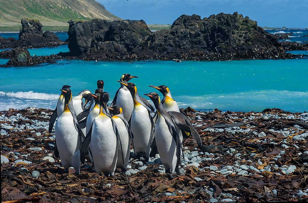 Penguins in front of blue sea