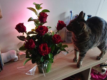 Happy Self-Valentine's Day
