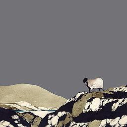 Harris Sheep 8x8.jpg