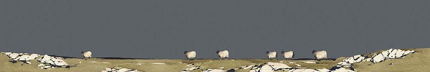 WAANDERING SHEEP.jpg