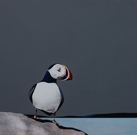 Puffin Portait 2 - Image Size 15 x 15 in