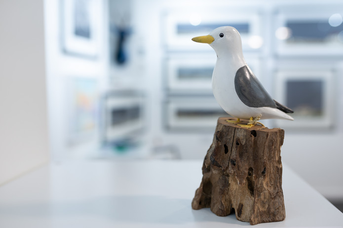 Archipelago Seagull