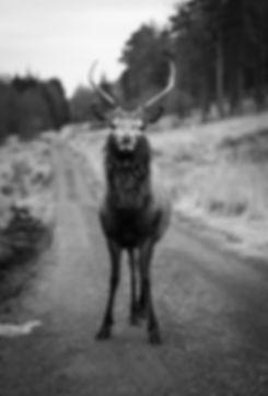 04 Jan 2019 Glen Etive, Highlands _.jpg