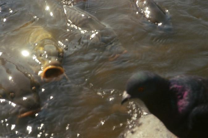 birdfish.png