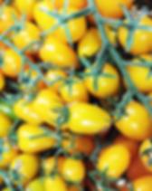 Pomodoro Datterino Giallo1 - La Fattoria