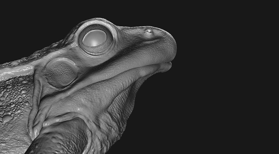 frog modeling
