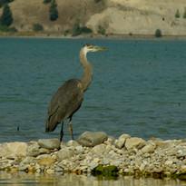 Columbia Lake 168.jpg