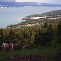 Columbia Lake 137.jpg