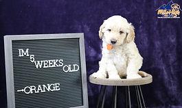 Orange 5 Weeks.JPG