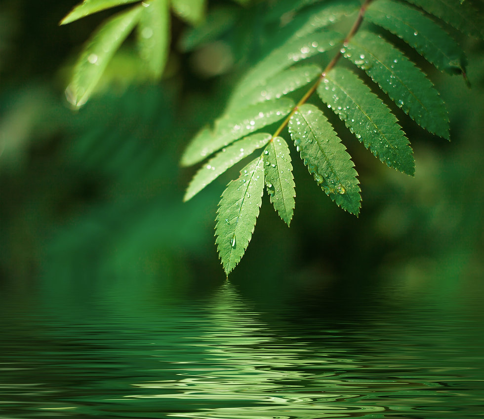 Wet%20leaves%20with%20drops%20over%20wat
