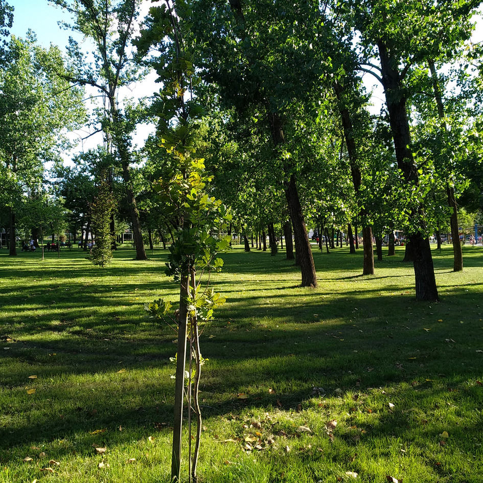 0. parcul cu gradini (7).jpg