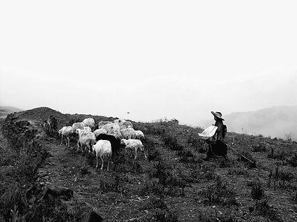 19 - La bergère et les moutons n et b.jp