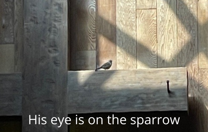 His eye on the sparrow.png