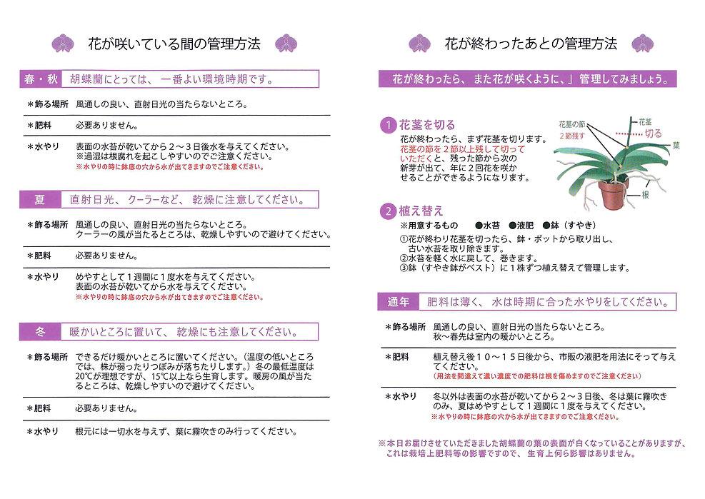 胡蝶蘭のお手入れ方法.jpg