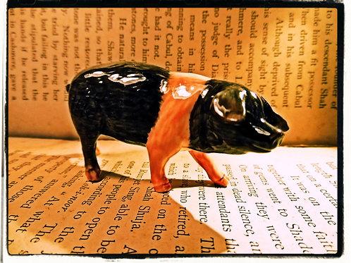 Miniature Pig.