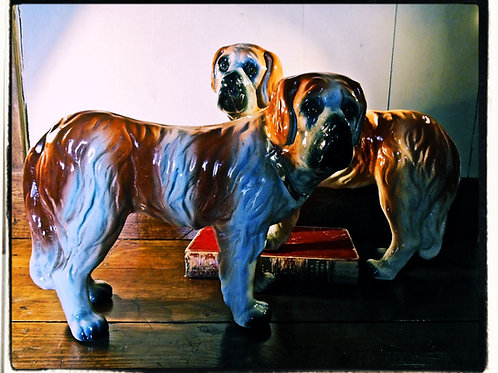 Staffordshire St. Bernards