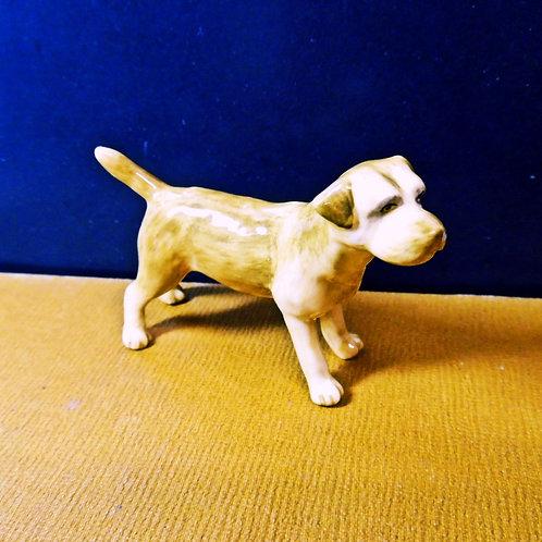 Miniature Border Terrier