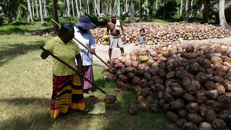 Coconut plantations with Farmers.jpg