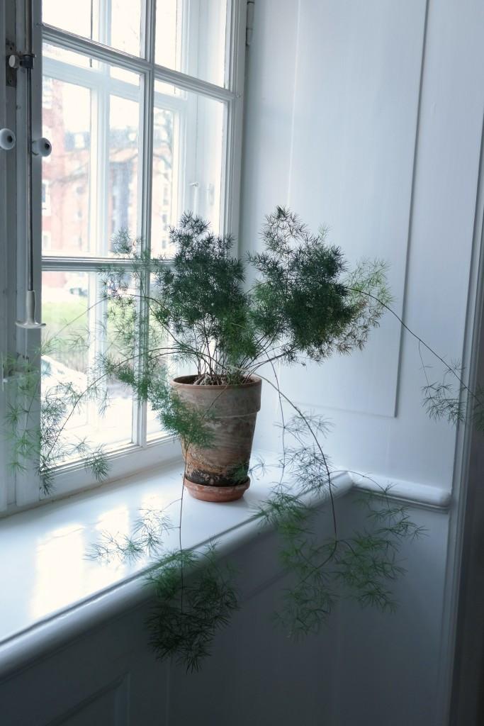 De grønne plantene i denne leiligheten kunne flyttet rett hjem til oss