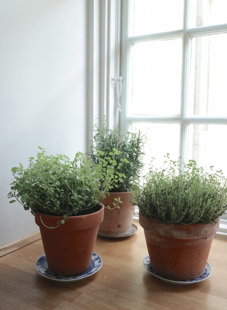 Bugnende urteplanter badet i lyset på kjøkkenet