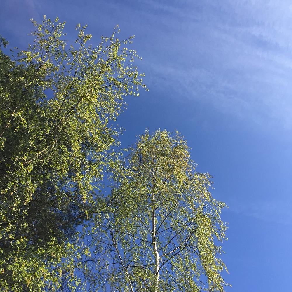 Trær er vakkert og det er sunt at barna skal klatre - sånn for motorikk og fysikk og slikt. Men må de helt på toppen, liksom, det er det jeg lurer på?