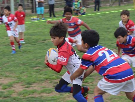 Carneros RC cierra en el Parque Pedro de Valdivia la temporada de festival de rugby infantil.