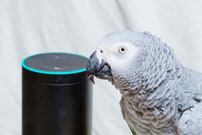 Who's a naughty boy then? Rocco the homeless parrot was in the bird equivalent of the doghouse after using his speaking talents to order treats on Amazon.