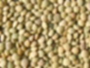 LentilhaSeca-184x140.jpg