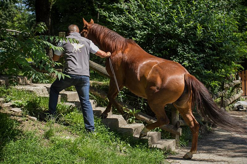 Free Horse Style