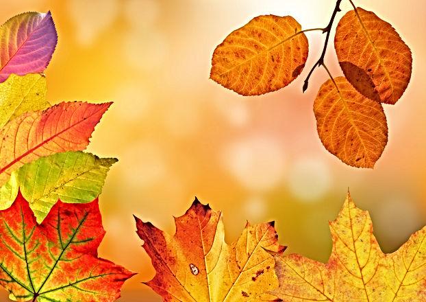 autumn-1649362.jpg