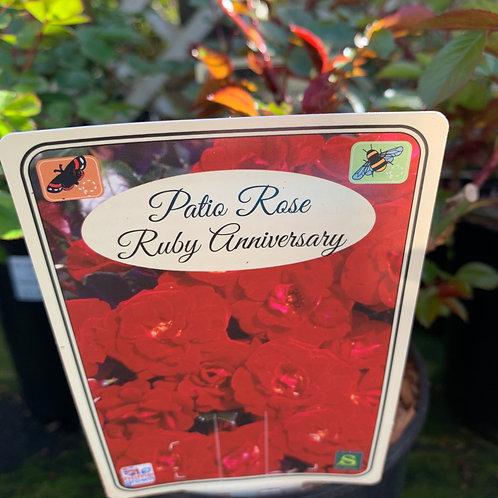 'Ruby Anniversary' patio