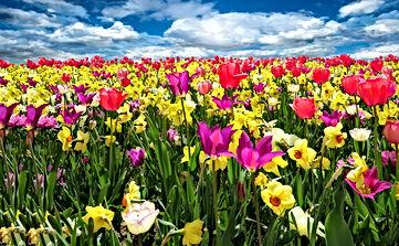 spring-awakening-1197602.jpg