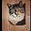 Thumbnail: Portrait Animalier _ Chat (Type n°1)
