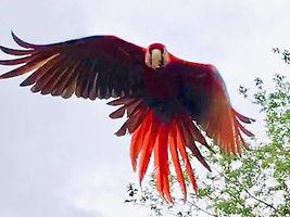 parrot 10.jpg