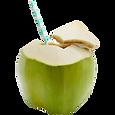 Coconut_with_Straw_Cropped_2048x2048_edi