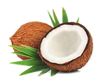 Coconut-Transparent-File.png