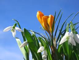 spring+flowers13-2.jpg