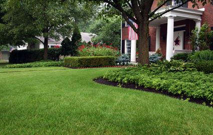 front-lawn_0795.jpg
