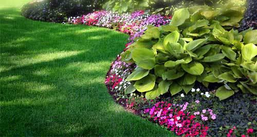 lawn-hostas.jpg