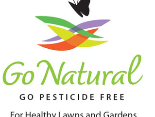 How to Rid Insects Naturally