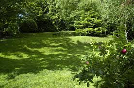 Lawn Care Tips for GA
