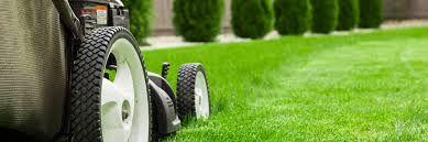 Basic Lawn Care - Option 1