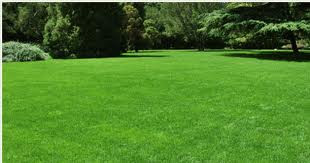Fertilize Your Lawn at the right Time