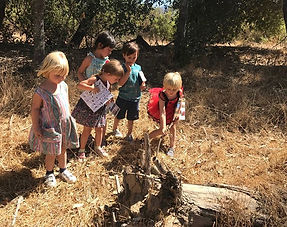 Animal Tracking… Searching for animals h