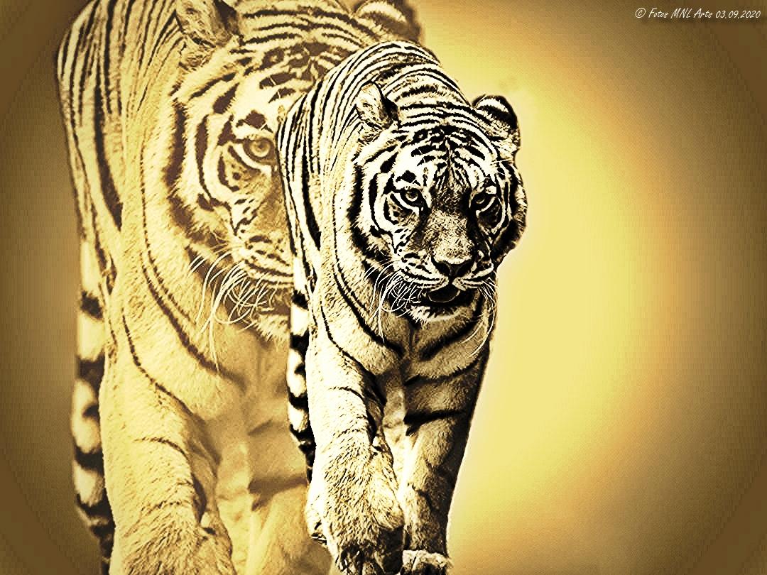 Variationen vom Tiger (3)